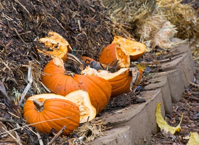Fall_Compost_DSC_9915