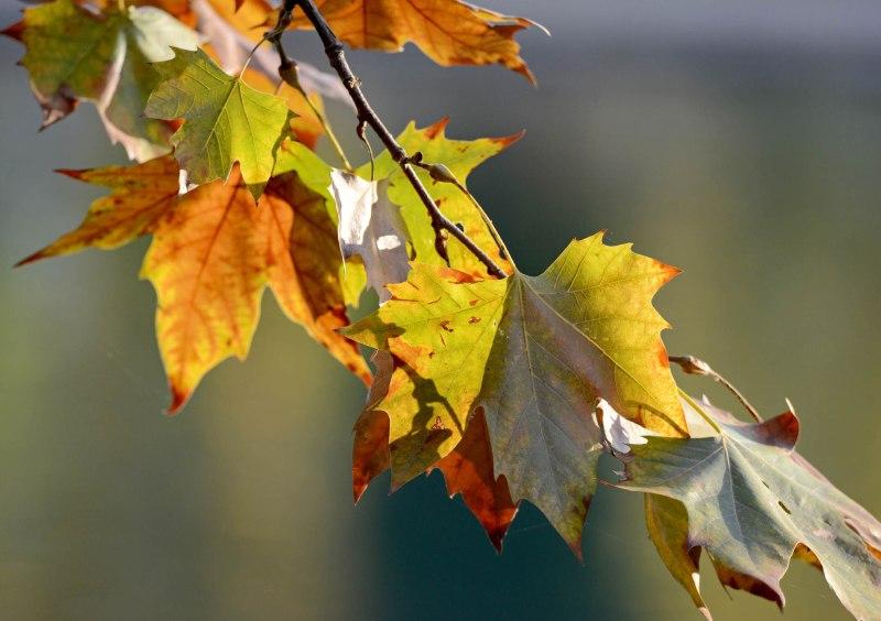 Fall_DSC_8326
