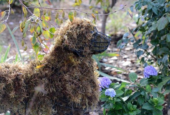 Garden Dog_Fall_DSC_7588
