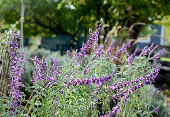 Garden_Fall_DSC_7596