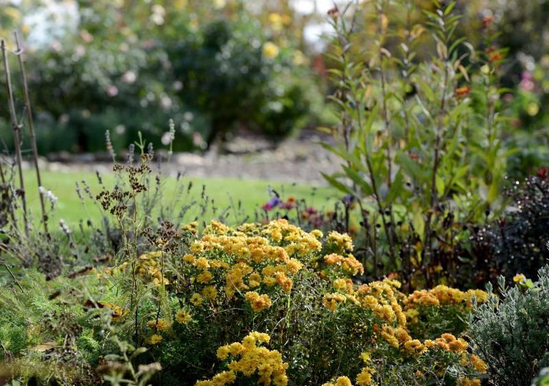 Garden_Fall_DSC_7600