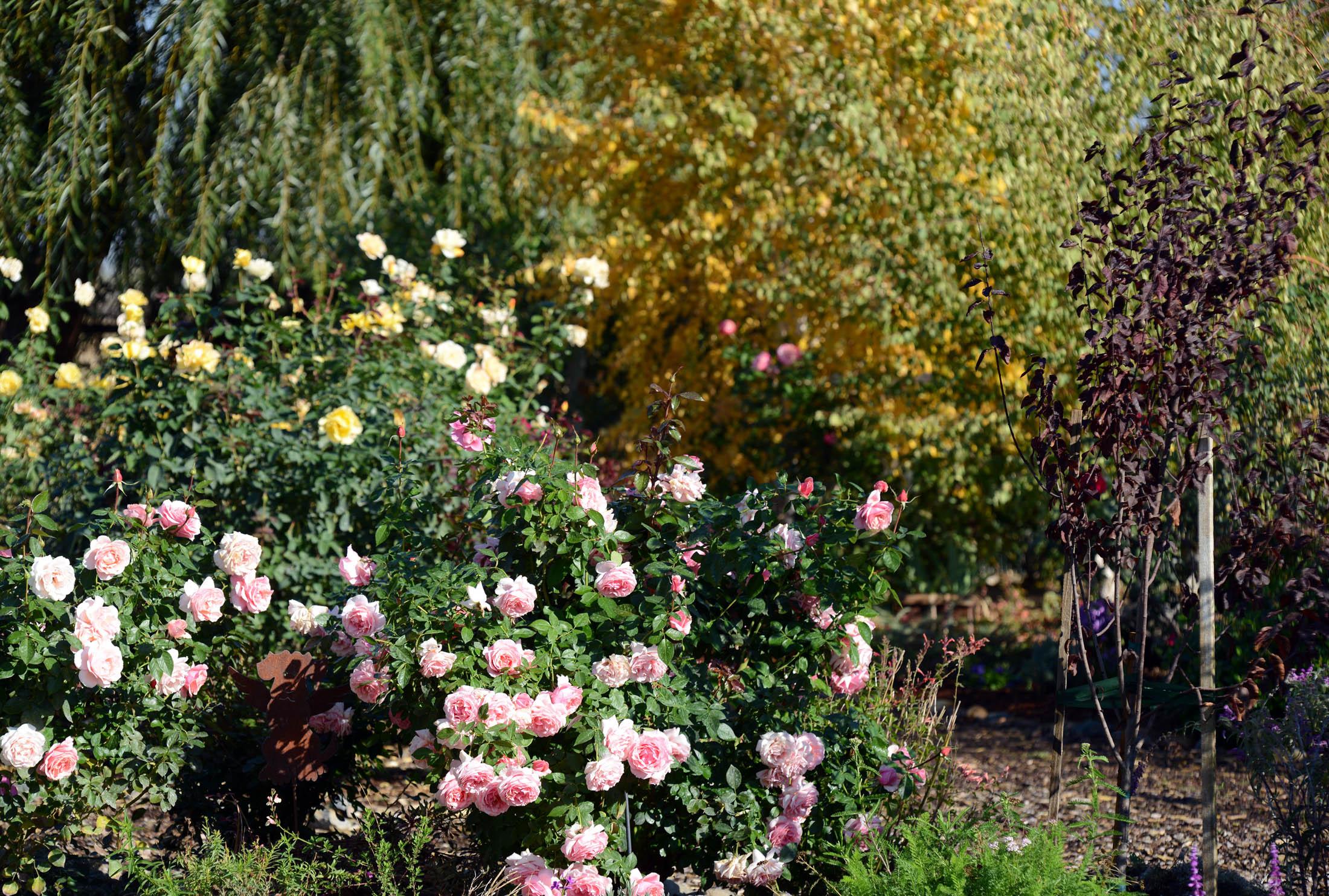 Garden_Fall_DSC_8481