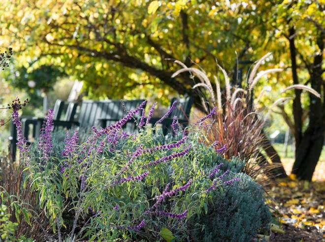 Garden_Fall_DSC_8858