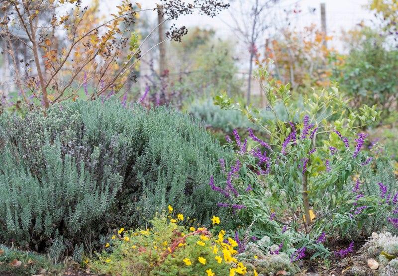 Garden_Fall_DSC_9161