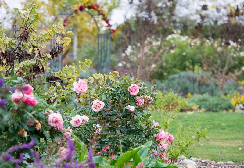 Garden_Fall_DSC_9165