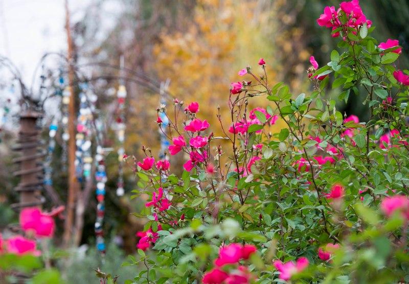 Garden_Fall_DSC_9167
