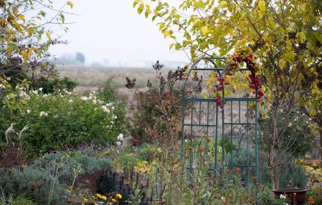 Garden_fall_DSC_9172