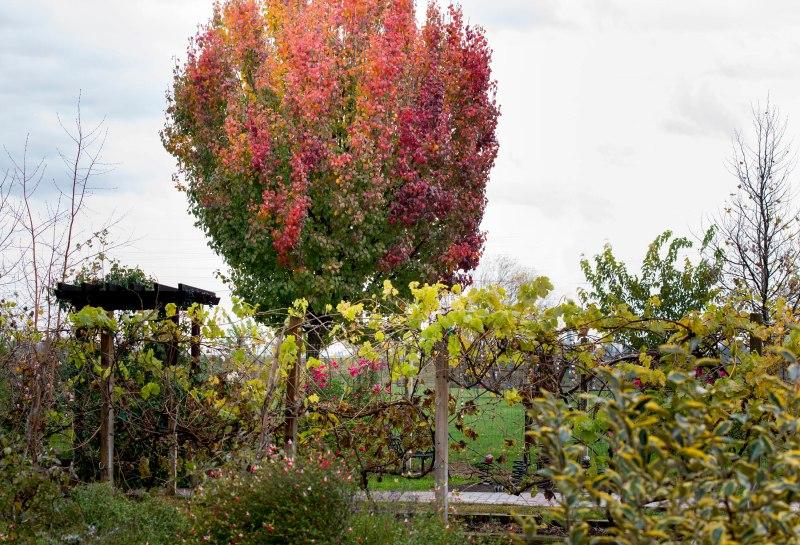 Garden_Fall_DSC_9964