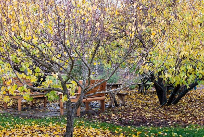 Garden_Fall_DSC_9965