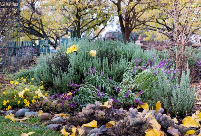 Garden_Fall_DSC_9975