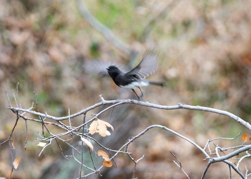 Grey-Bird_DSC_8974