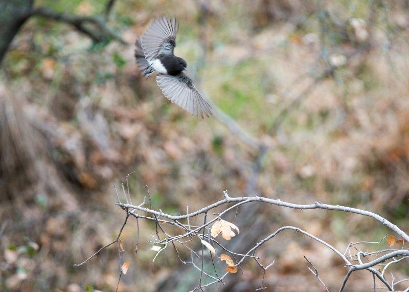 Grey-Bird_DSC_8975