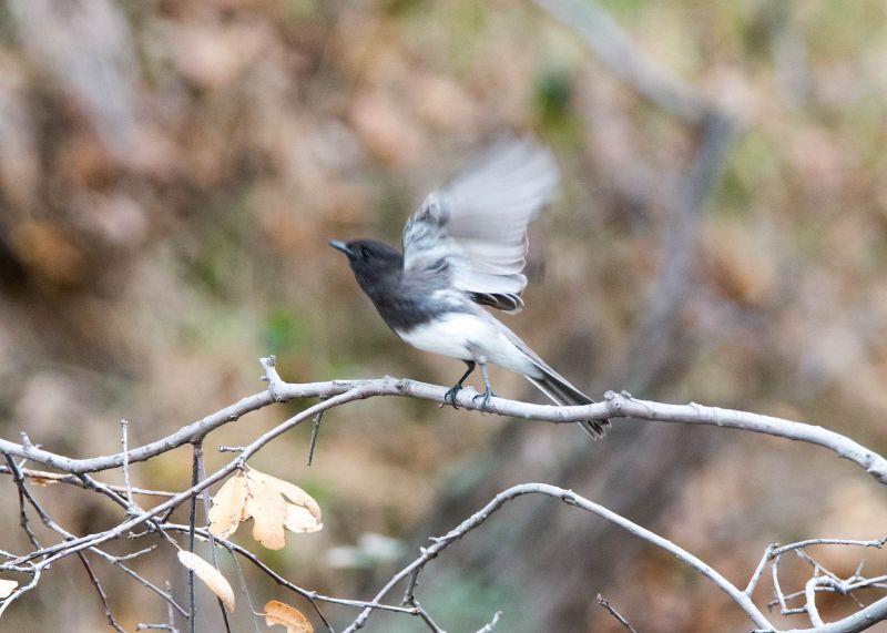 Grey-Bird_DSC_8996