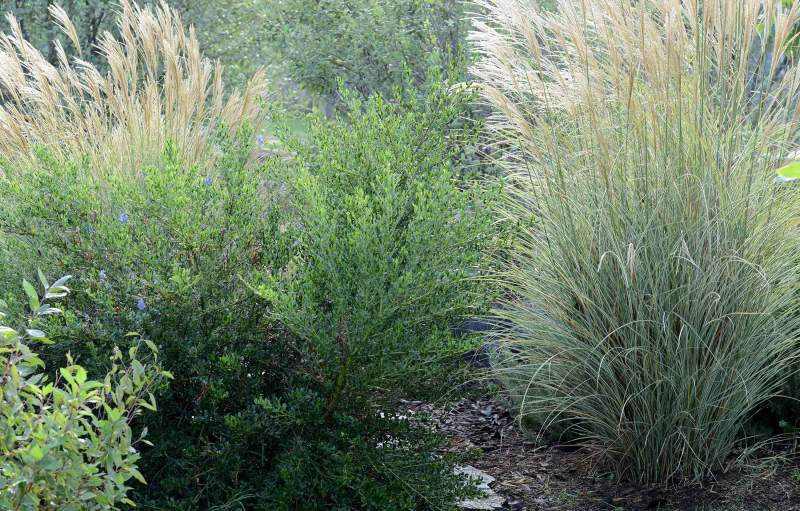 Inas-Grasses_DSC_7605