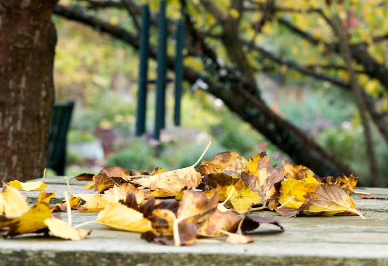 Leaves_Fall_DSC_9922