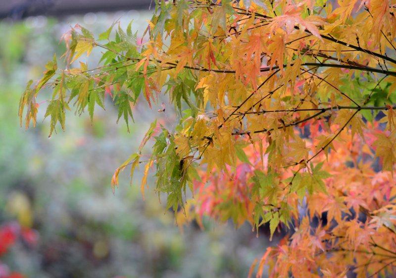 Leaves_Rain_DSC_8661