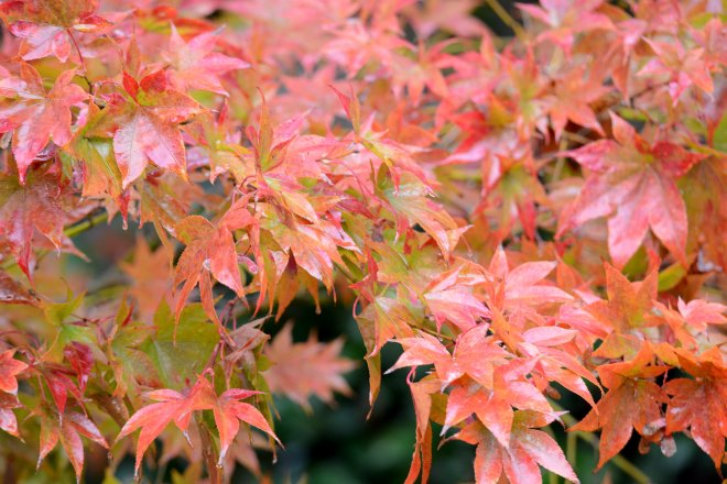 Leaves_Rain_DSC_8667