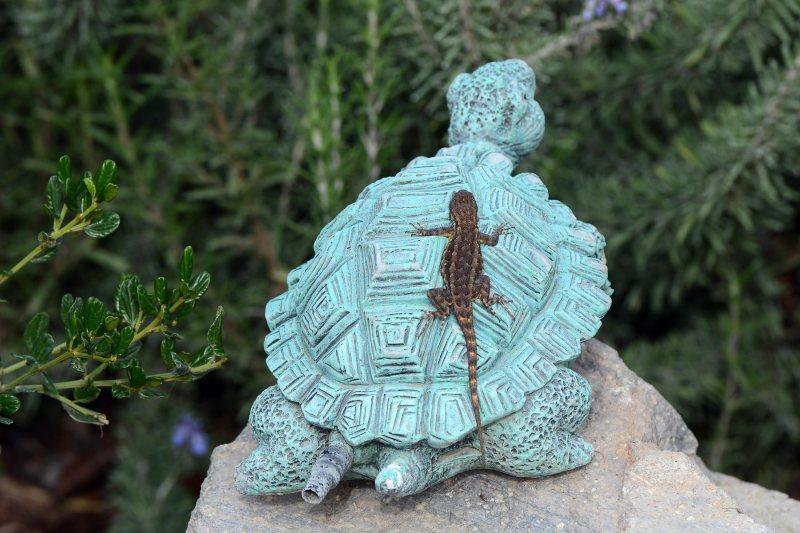 Lizard_Turtle_DSC_8948