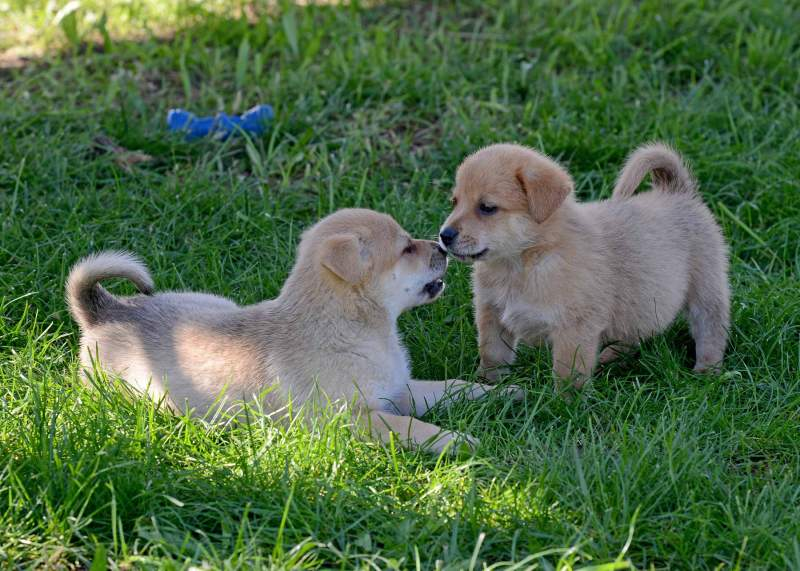 Puppies_Nice_DSC_7326