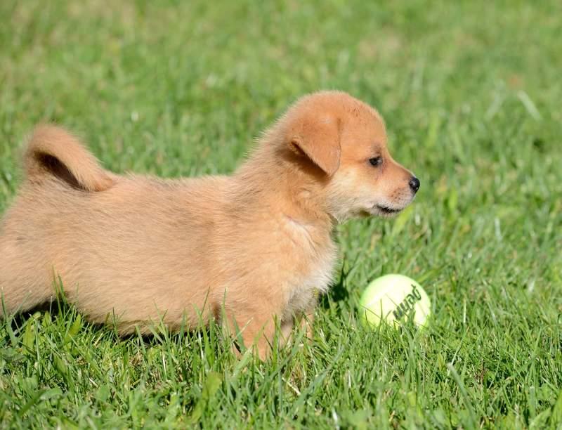 Puppy_Ball_DSC_7359