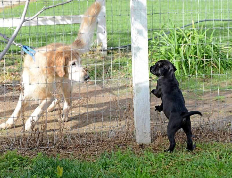 Puppy_Dog_DSC_7239