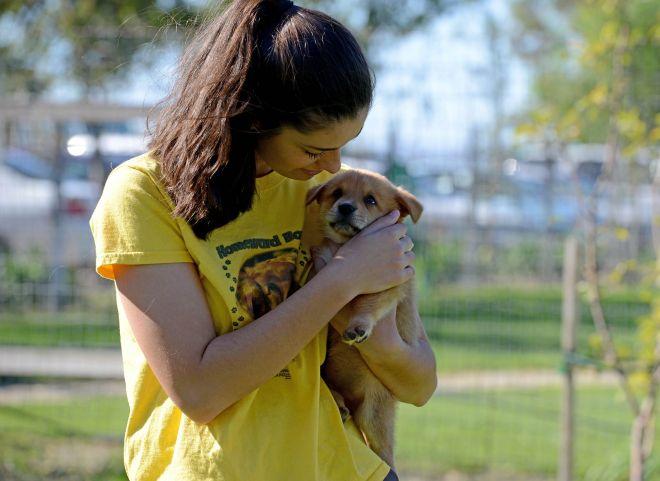Puppy_Volunteer_DSC_7430