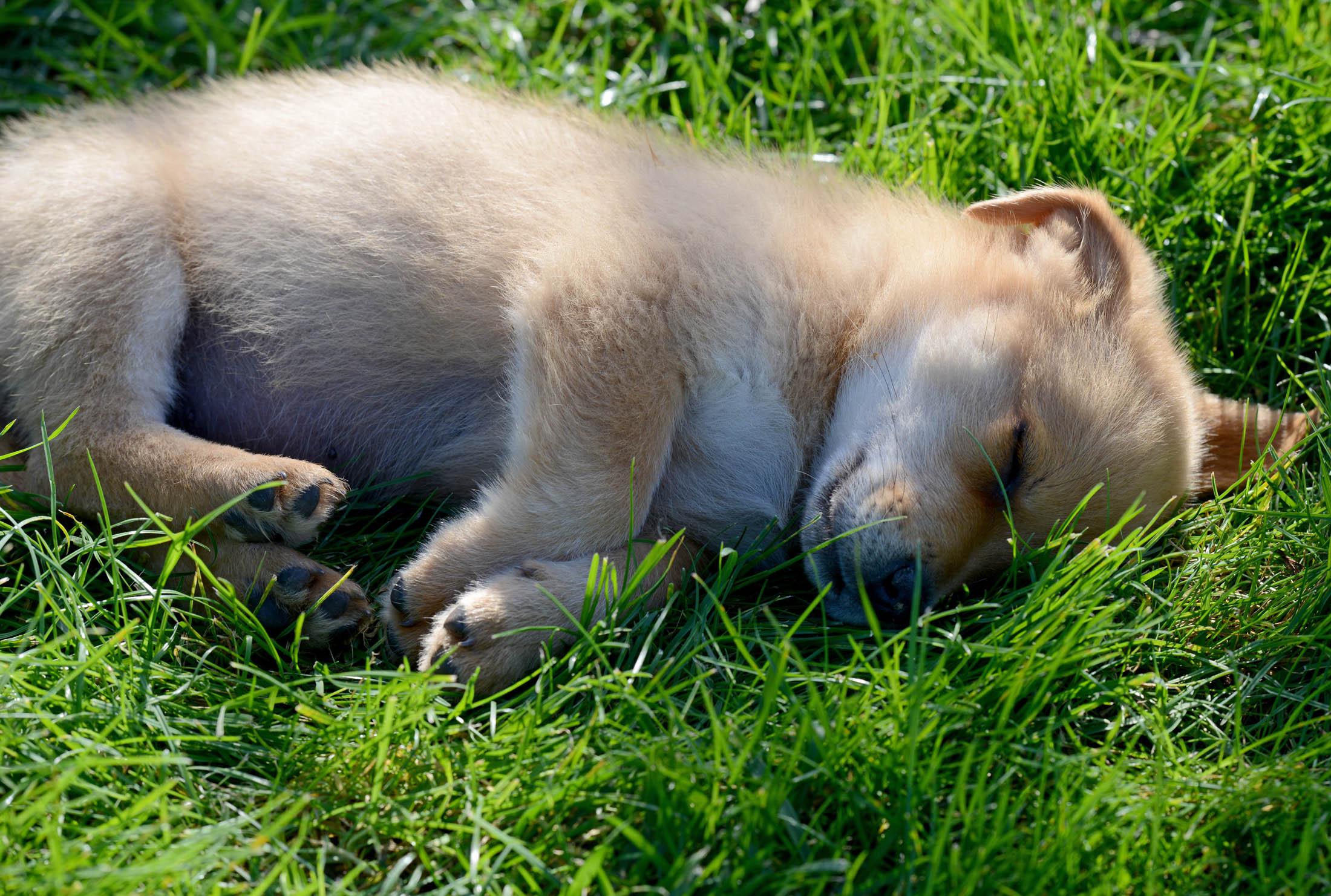 Sleeping Puppy_DSC_8194