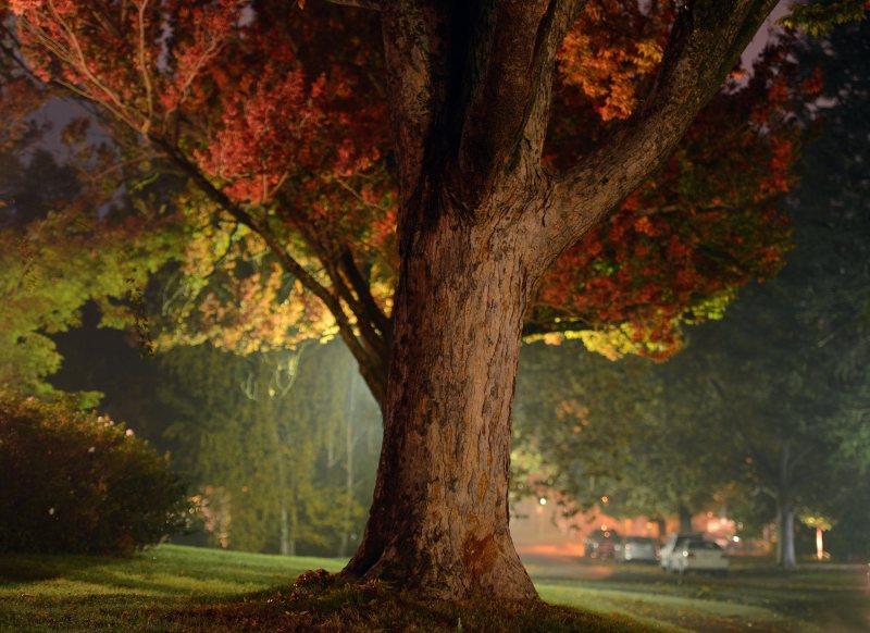 Tree_Fog_DSC_8675