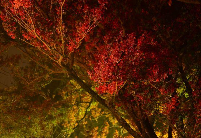 Tree_Fog_DSC_8698
