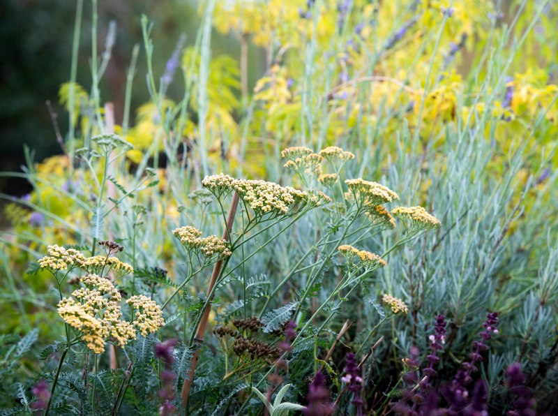 Yarrow_Fall_DSC_9967