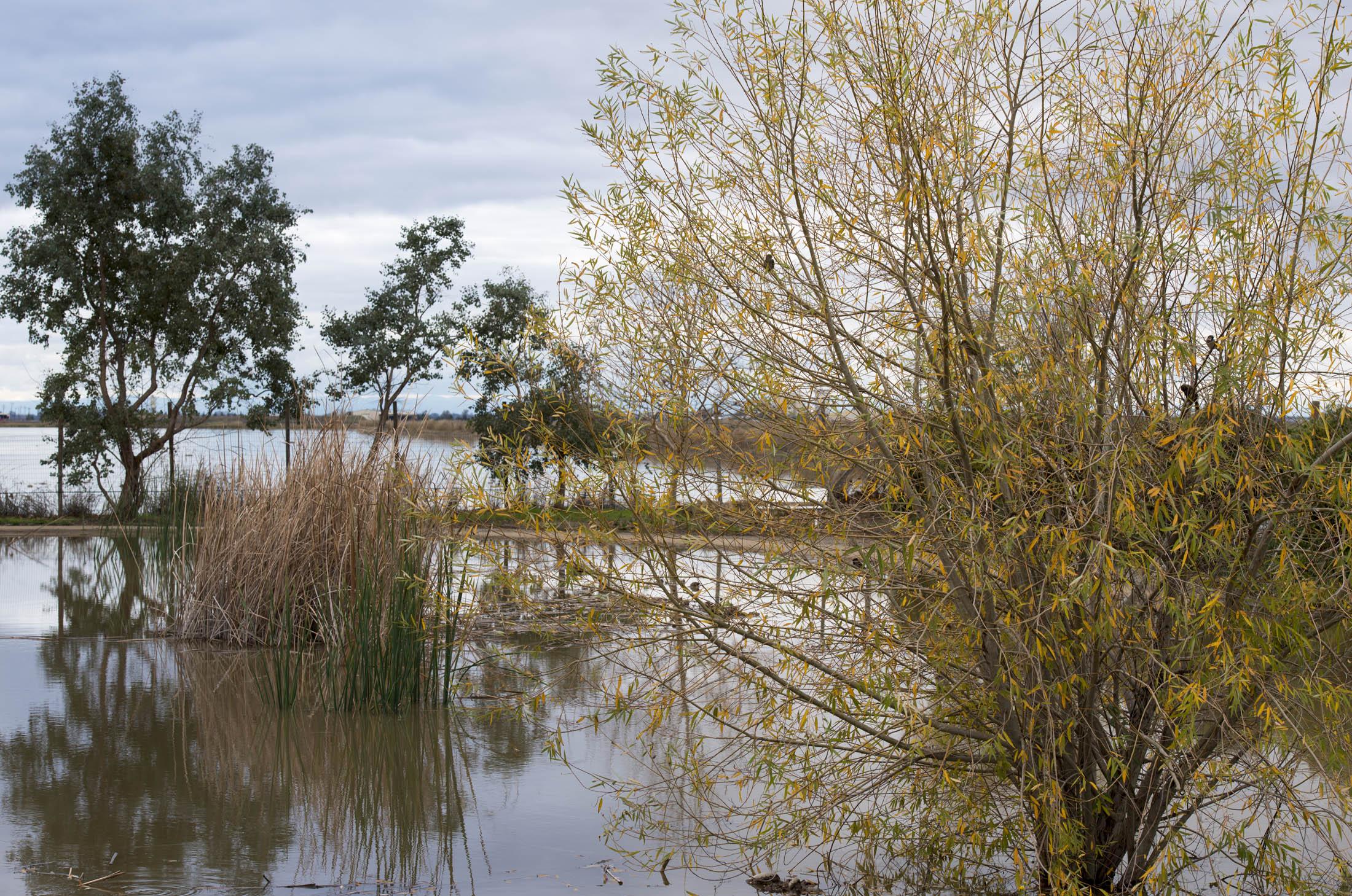 December_Flood_DSC_0421