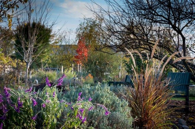 Garden_December_DSC_0103