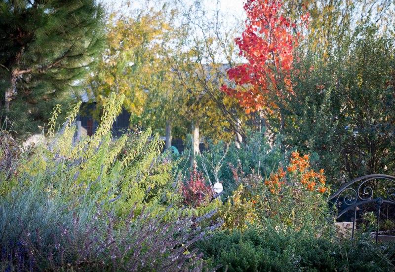 Garden_December_DSC_0105