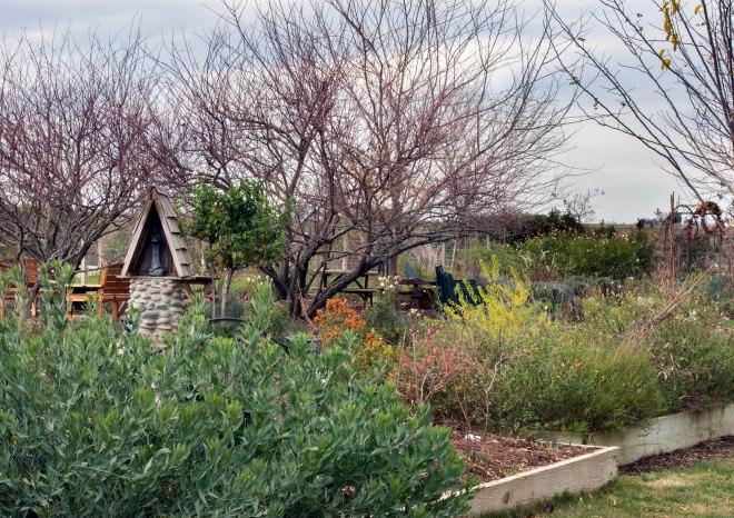 Garden_December_DSC_0435