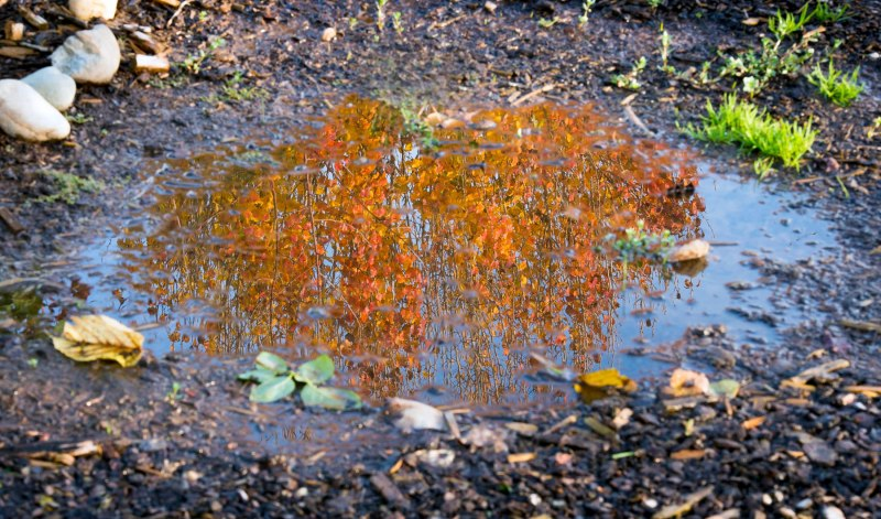 Reflection_Fall_DSC_0085
