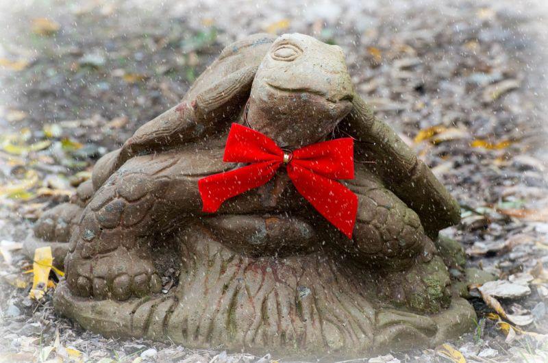 Turtle_DSC_0235