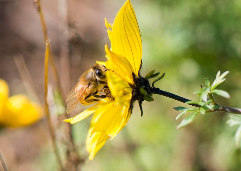Bee_DSC_3587