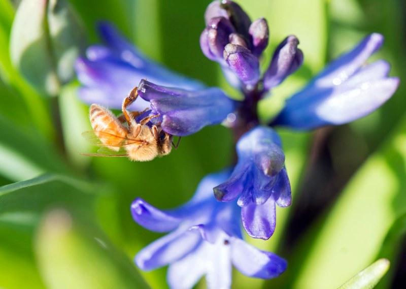 Bee_DSC_3593
