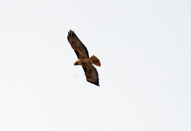 Bird_DSC_1689