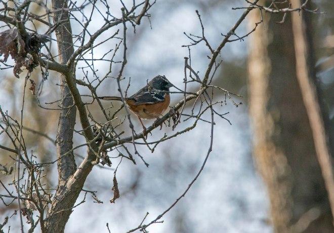 Bird_Woods_DSC_1682