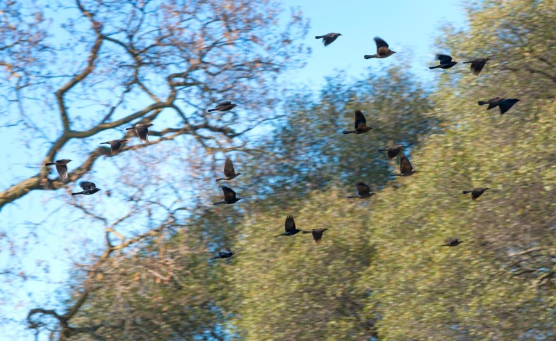 Birds_Flight_DSC_2476