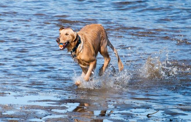 Dog_River_DSC_1529