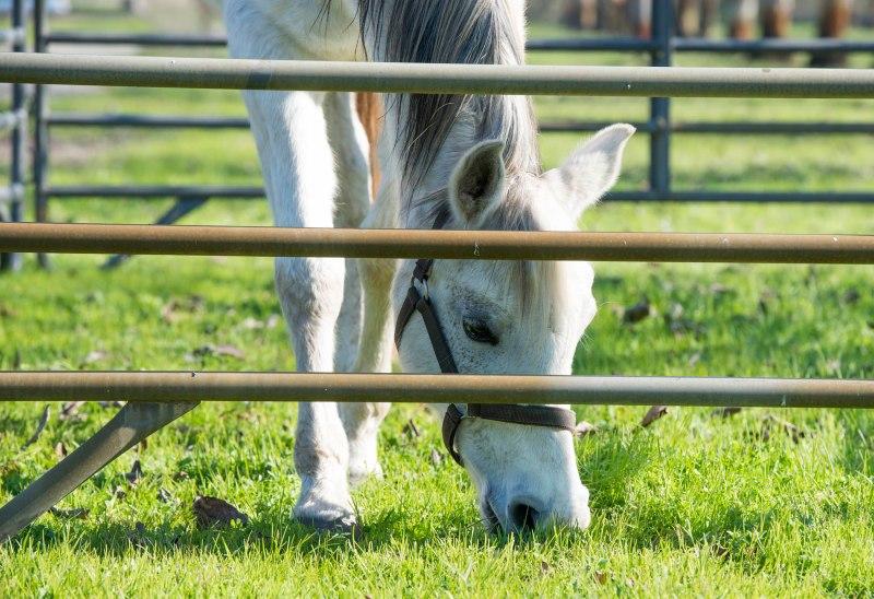 Horse_DSC_1772