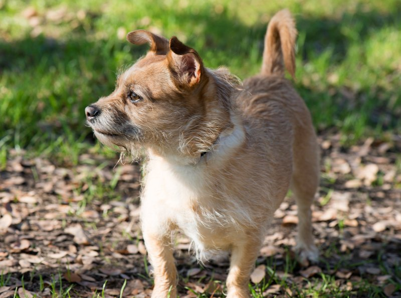 Little-Dog_DSC_3123