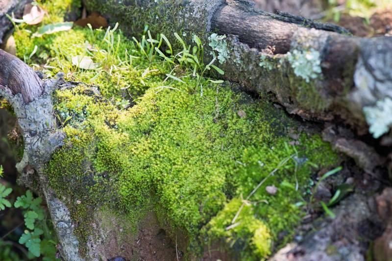 Moss_DSC_3135