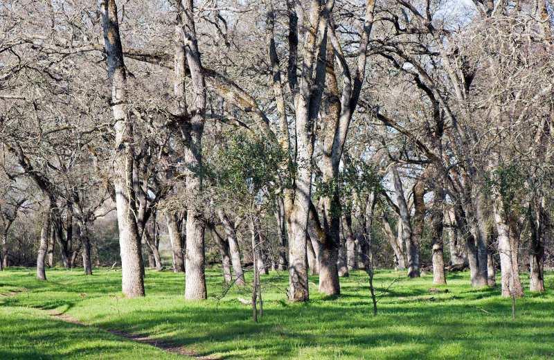 Oak-Grove_DSC_3146