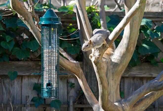 Squirrel_DSC_1618