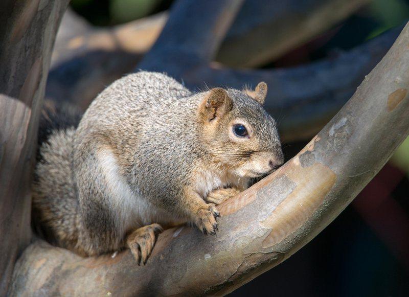 Squirrel_DSC_1633