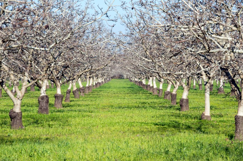 Walnut_Orchard_DSC_1775