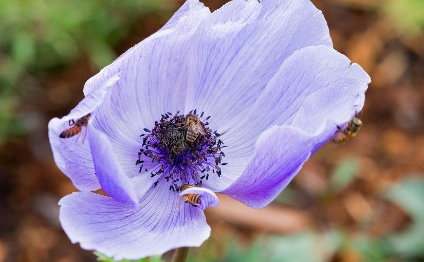 If I had a singleflower…
